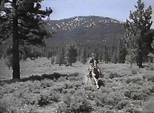 Bonanza Horse Biograph...