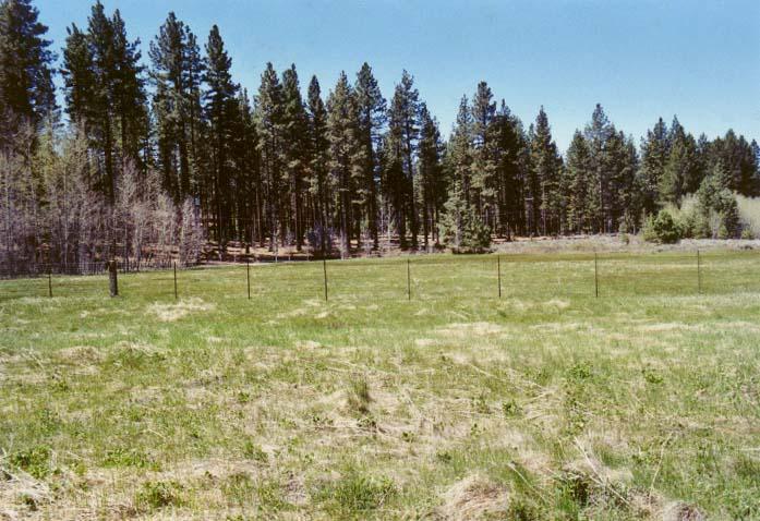 Bourne's Meadow Photo - 3