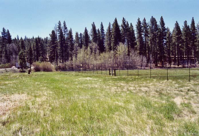 Bourne's Meadow Photo - 5