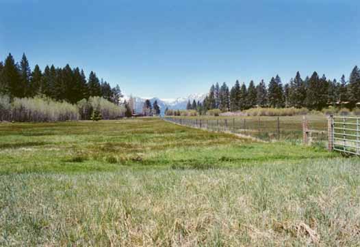 Bourne's Meadow Photo 11