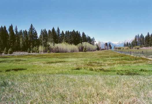 Bourne's Meadow Photo 12