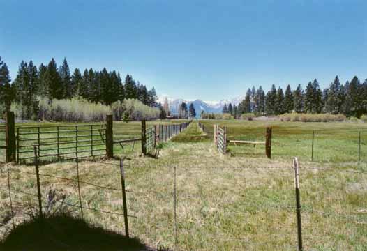 Bourne's Meadow Photo 15