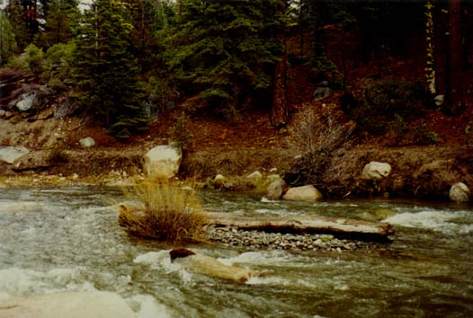 Clark Fork River Photo 5