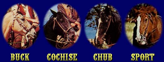 Buck, Cochise, Chub and Sport!