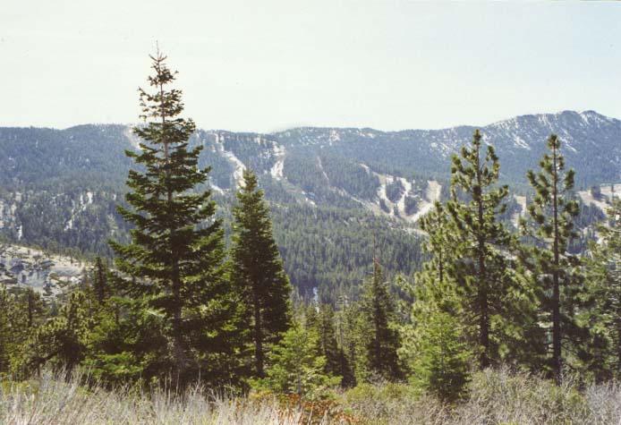 Mount Rose: West Summit Photo 10