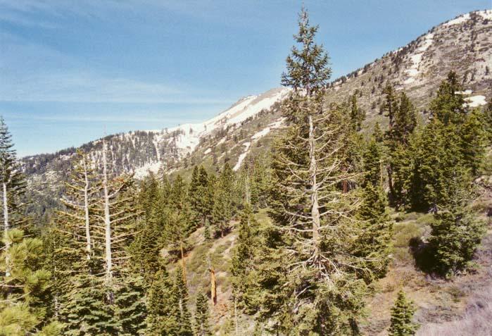 Rose Knob Peak Photo 1
