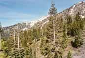 Mount Rose: West Summit Photo 28