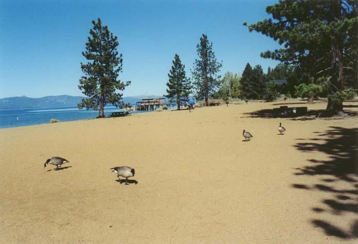 Nevada Beach Photo 22