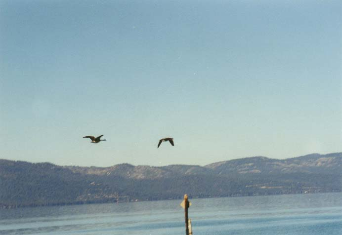 Nevada Beach Photo 11