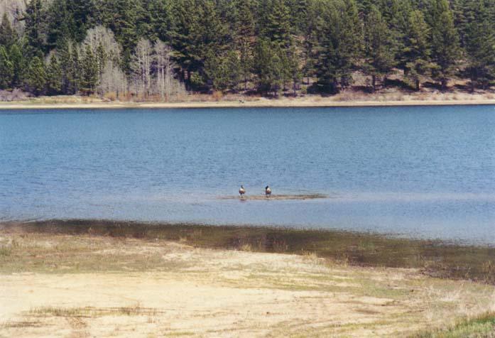 Spooner Lake Photo 21