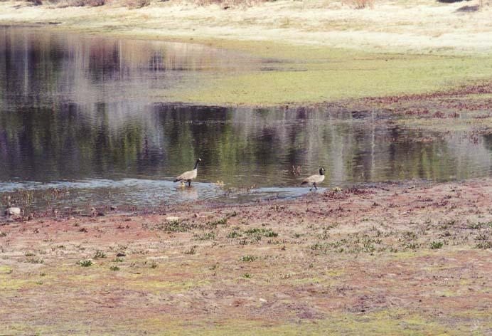 Spooner Lake Photo 23