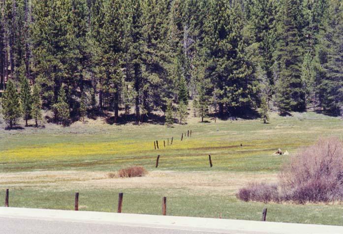 Spooner Meadow Photo 24