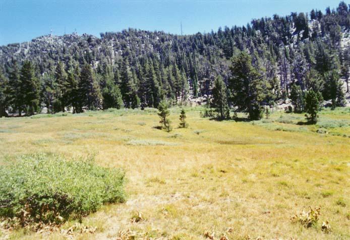 Tahoe Meadows Photo - 12