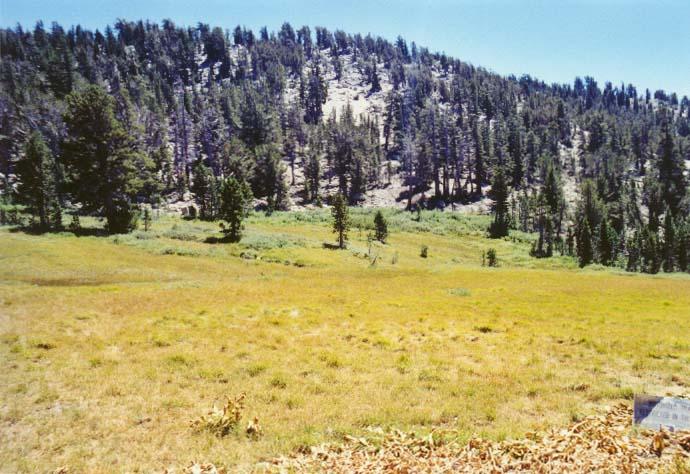 Tahoe Meadows Photo - 14