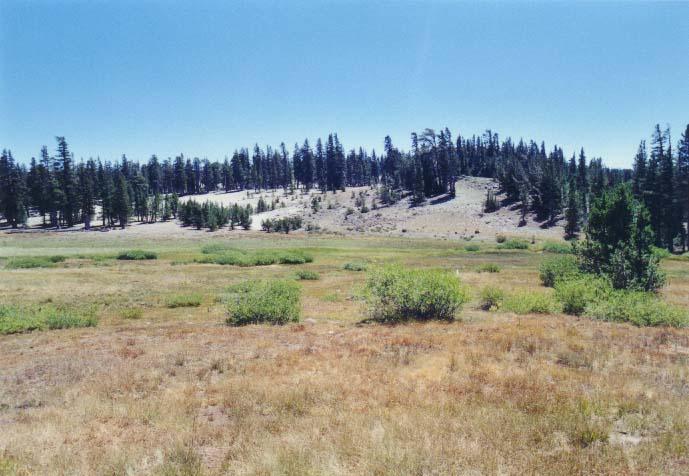 Tahoe Meadows Photo - 18