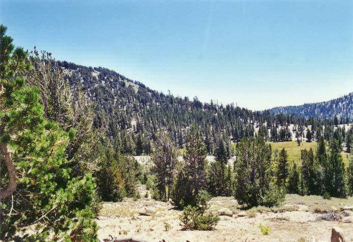Tahoe Meadows Photo - 29