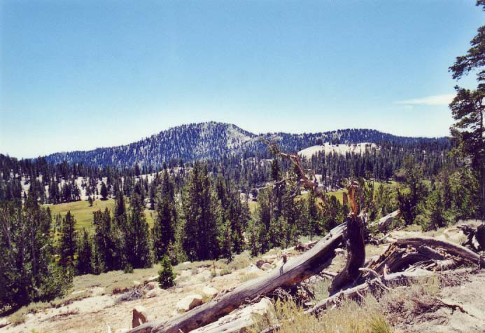 Tahoe Meadows Photo - 31