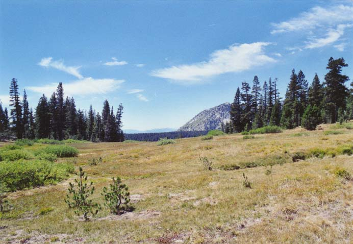 Tahoe Meadows Photo - 32