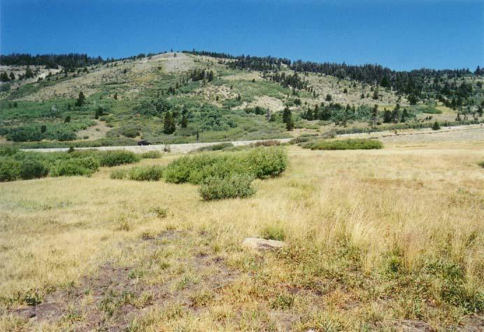 Tahoe Meadows Photo - 25