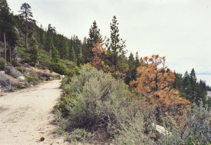 Tunnel Creek Road Photo 1